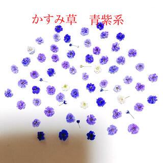 かすみ草 ドライフラワー 青紫系 60輪(各種パーツ)