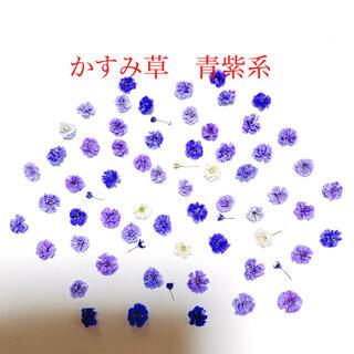 かすみ草 ドライフラワー 青紫系 100輪(各種パーツ)
