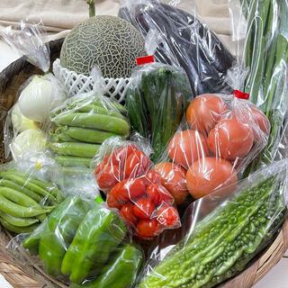 肥後グリーンメロン&野菜セット 熊本県産 送料込(野菜)