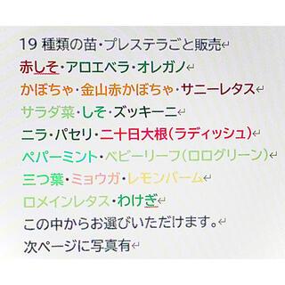 野菜&ハーブ苗 15株セット(野菜)