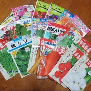 春まき野菜のタネ7種 Cセット(野菜)