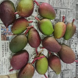グリーン マンゴー 3kg 摘果 漬物用 2(フルーツ)