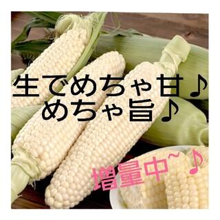 生食OK◎ホワイトコーン シルバートップの種(その他)