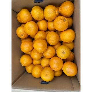 最終入荷❗️鹿児島県産 デコあま L 約10kg(フルーツ)