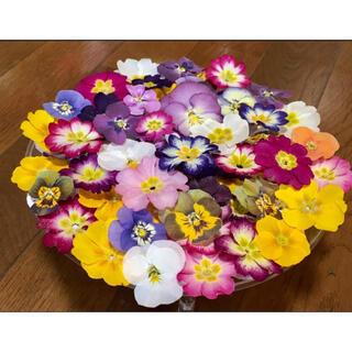 100円お値引き‼️銀の紫陽花が作ったビオラ➕プリムラ山盛り70冠です(ドライフラワー)