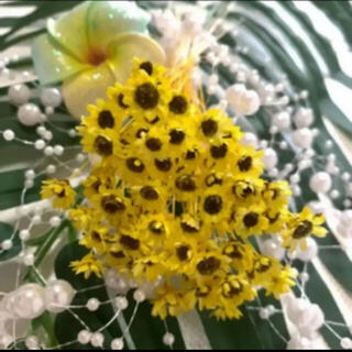 スターフラワーブロッサム ひまわりカラー 80輪 ハーバリウム花材(ドライフラワー)