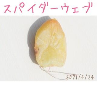 【大人気 激レア品種】スパイダーウェブ 葉挿し 発根済み! 多肉植物(その他)