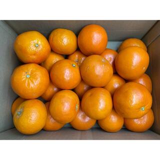 産地厳選 セミノール 2L 約5kg(フルーツ)