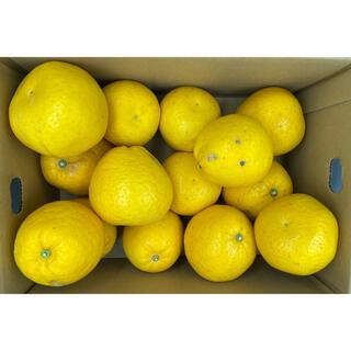 鹿児島県産 サウスオレンジ 2L 約4kg(フルーツ)