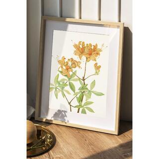 【NO.268】A4☆黄色アゼリアの花アートポスター☆ナチュラルインテリア植物(アート/写真)