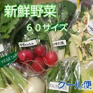 新鮮野菜【60サイズ野菜セット&ギュギュッと乾燥野菜♪】農薬不使用(野菜)