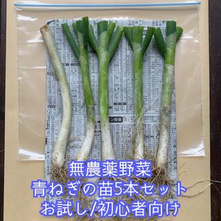 無農薬野菜*根っこ&土付き青ねぎの苗*お試し5本セット*プランター*初心者向け*(野菜)