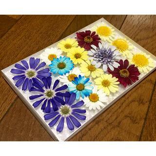 14  銀の紫陽花が作った春色マーガレットのお詰め合わせです(ドライフラワー)