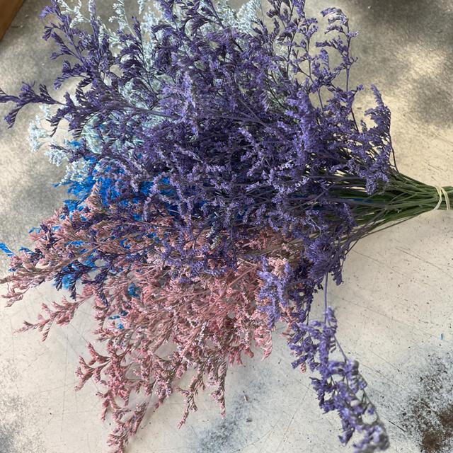 カラーブルーファンタジアドライフラワー ハンドメイドのフラワー/ガーデン(ドライフラワー)の商品写真