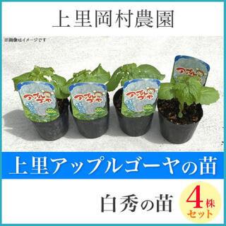 42862【白4】上里岡村農園寅さんのアップルゴーヤの苗4株セット(野菜)