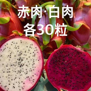 ★GW価格★ ドラゴンフルーツ★種子 【赤肉30粒+白肉30粒】(その他)
