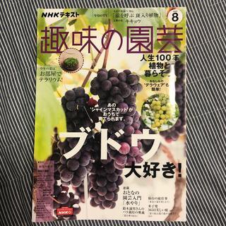 ぶどう NHK 趣味の園芸 2020年 08月号(専門誌)