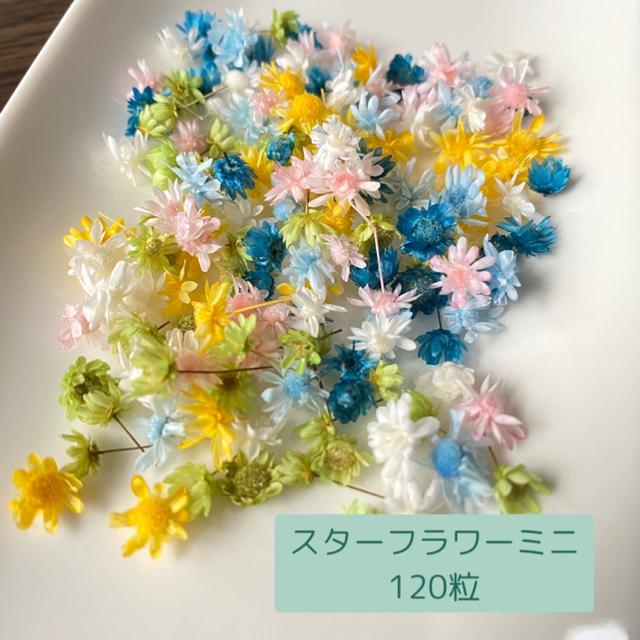 120個6色  スターフラワーミニ  ハンドメイドのフラワー/ガーデン(ドライフラワー)の商品写真