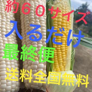 農家直送ゴールドホワイト約60サイズ入るだけ説明欄必見(野菜)