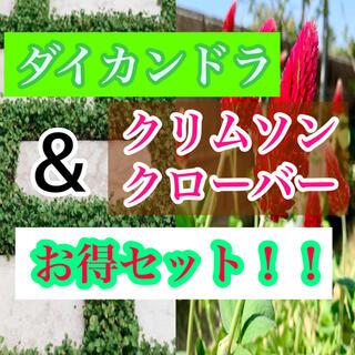 【お得セット】ダイカンドラ 5g & クリムソンクローバー5g(その他)