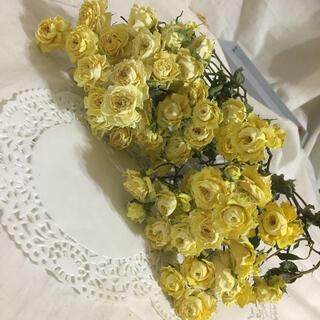 スプレー薔薇 アルモニ(ドライフラワー)