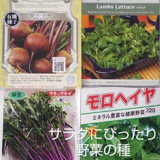 ビーツ 赤紫水菜 モロヘイヤ ラムズレタス 野菜の種(野菜)