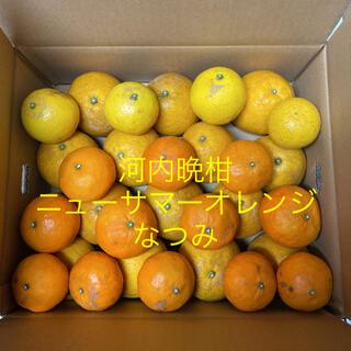 河内晩柑 ニューサマーオレンジ なつみ(フルーツ)