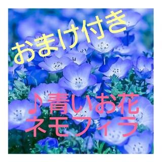 花の種◎青く美しい花♪ネモフィラの種(その他)