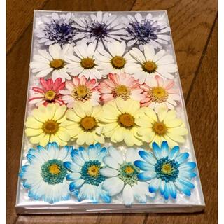 ⑤  銀の紫陽花が作った可愛い春色マーガレットのドライフラワー(ドライフラワー)