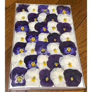 ⑦  銀の紫陽花が作った大人色ビオラのドライフラワーです(ドライフラワー)