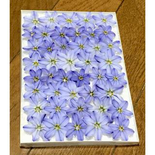 11  銀の紫陽花が作った青く美しいイフェイオンのドライフラワーです‼️(ドライフラワー)
