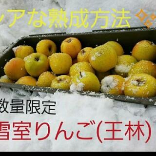 数量限定☆雪室りんご  王林  ミニサイズ5kg(フルーツ)
