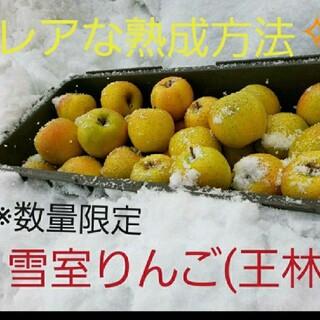 数量限定☆雪室りんご  王林家庭用5kg(フルーツ)