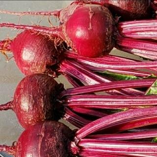 ビーツ1.2→1.5kgに増量中♪ 無農薬無化学肥料栽培(野菜)
