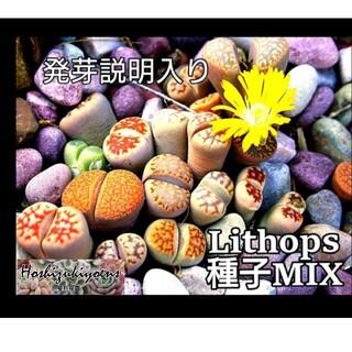 リトープス ミックス種子 50粒+α 発芽説明入り(その他)