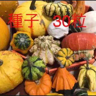 おもちゃかぼちゃの種 30粒(その他)