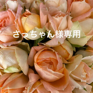 バラ・切り花・生花 モンシュシュ 長さ 30㎝ Sサイズ 60本 鮮度抜群!(その他)