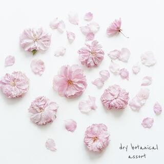 (訳あり)dryボタニカル / ピンクの花びら 八重桜 花材 ハンドメイド(ドライフラワー)