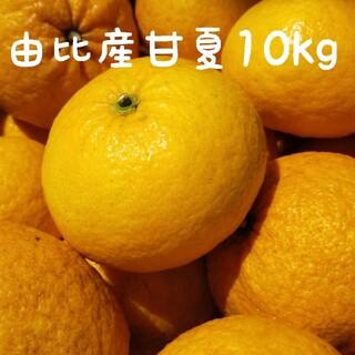 【大好評】静岡県産スルガ甘夏10kg(フルーツ)