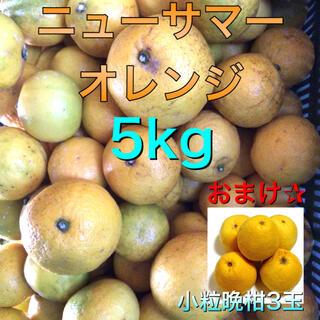 愛媛県産 ニューサマーオレンジ 5kg おまけ小粒晩柑3玉 訳あり 柑橘(フルーツ)