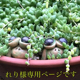 専用ページ 多肉 葉挿し チワワエンシス錦 (その他)