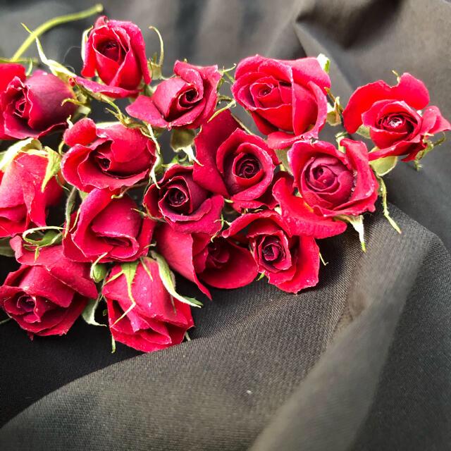 大容量!ミニ薔薇(茎長め)ドライフラワー★25輪セット+おまけ2輪付き★花材 ハンドメイドの素材/材料(その他)の商品写真