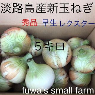 ☆淡路島産新玉ねぎ☆早生 レクスター 5キロ(野菜)