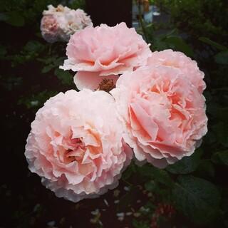 ウエラ(WELLA)の《花さま専用》ILLUMINAカラー(カラーリング剤)