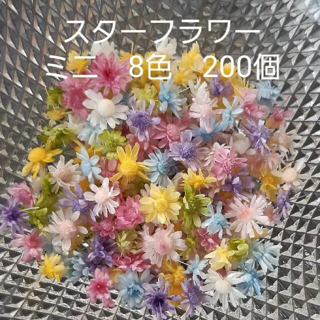 スターフラワーミニ8色 ヘッドのみ200個+おまけ ハンドメイドのフラワー/ガーデン(ドライフラワー)の商品写真