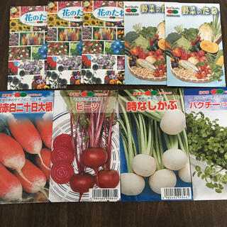野菜の種 7種(野菜)