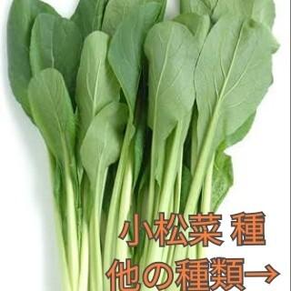 野菜種☆小松菜☆変更→ラディッシュ 黒キャベツ ベビーリーフ 茎ブロッコリー (野菜)