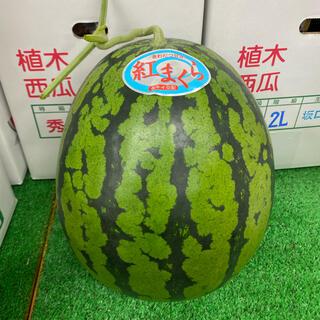熊本県植木産 大玉スイカ 紅まくら 1玉入り 6kg (フルーツ)