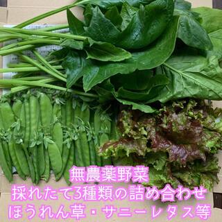 無農薬野菜*採れたて3種類の詰め合わせ*野菜セット*ほうれん草・サニーレタス等*(野菜)