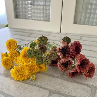 ドライフラワー花材 ラナンキュラス(ドライフラワー)